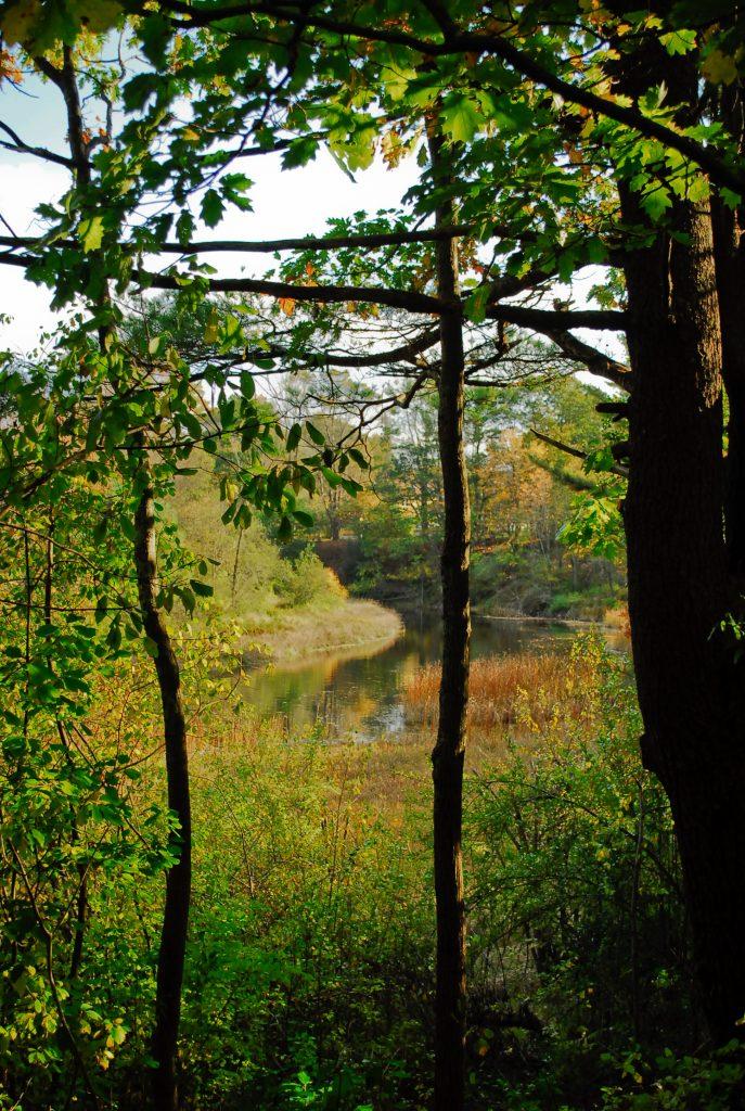 Guided Naturalist Walk: Wonder Brook Preserve @ Wonder Brook